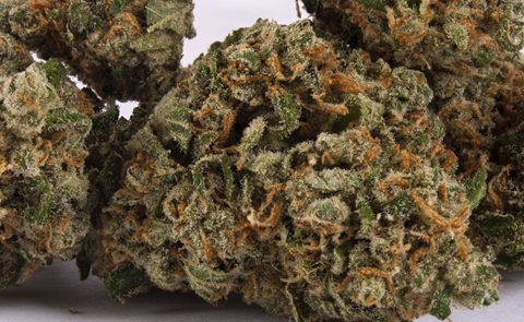 Green Crack Marijuana Strain (Review)