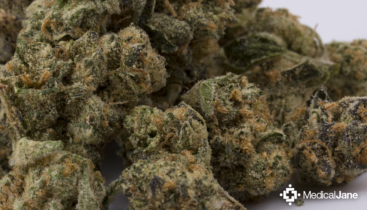 Animal Cookies Marijuana Strain