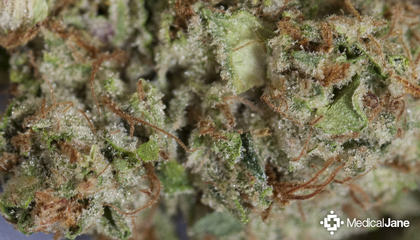 Louis XIII Marijuana Strain