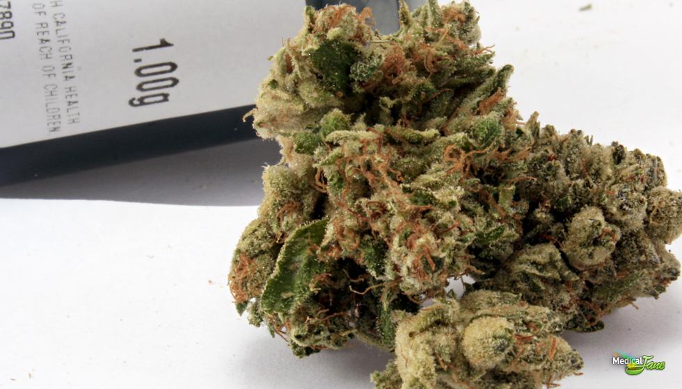 White Fire Marijuana Strain