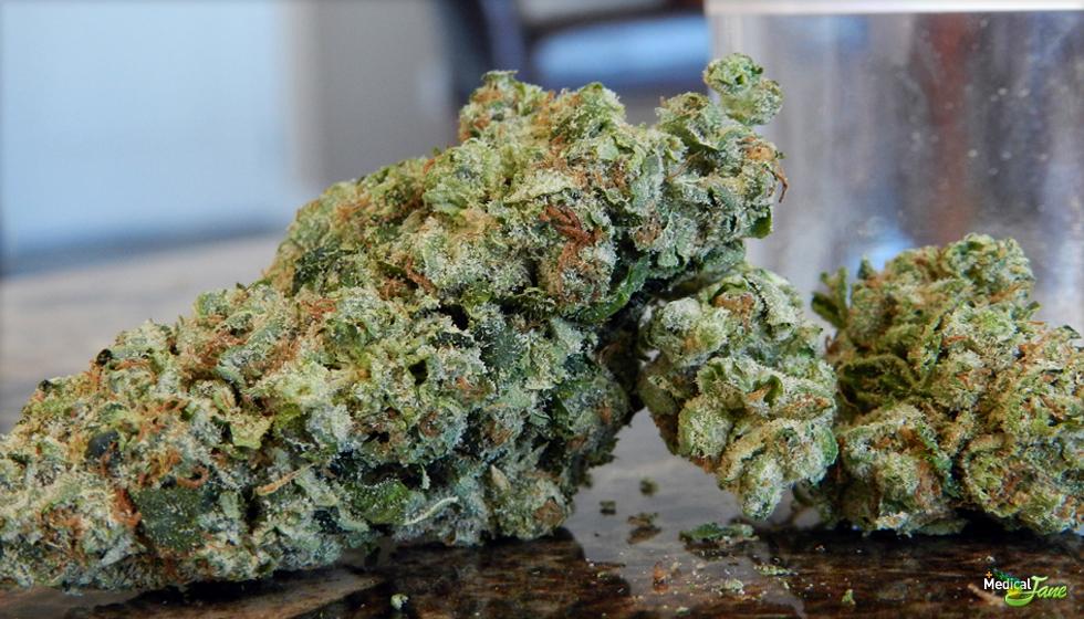 Northern Lights Marijuana Strain