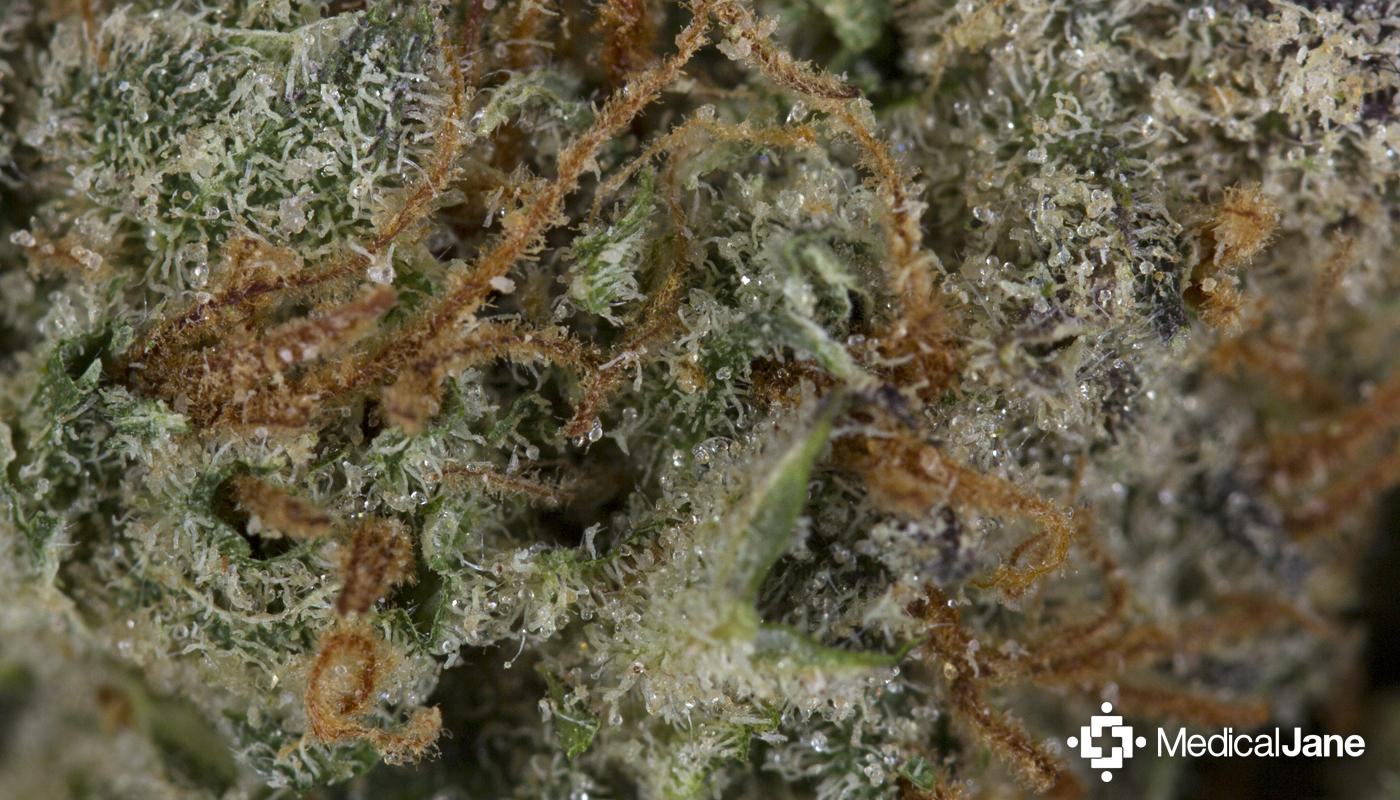 Super Silver Haze Marijuana Strain