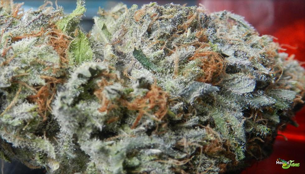 Strawberry Diesel Marijuana Strain