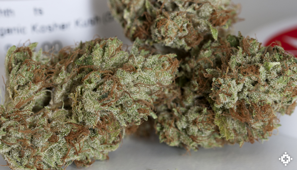 Kosher Kush Marijuana Strain