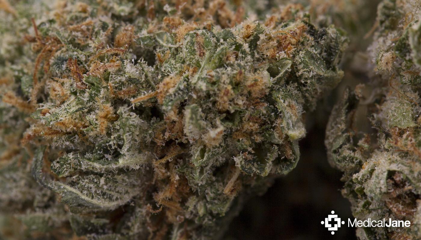 MK Ultra Marijuana Strain