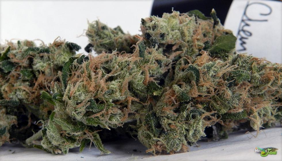 K Dog Strain Chemdawg Marijuana Strain