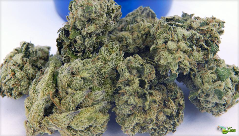 Royal Kush Marijuana Strain
