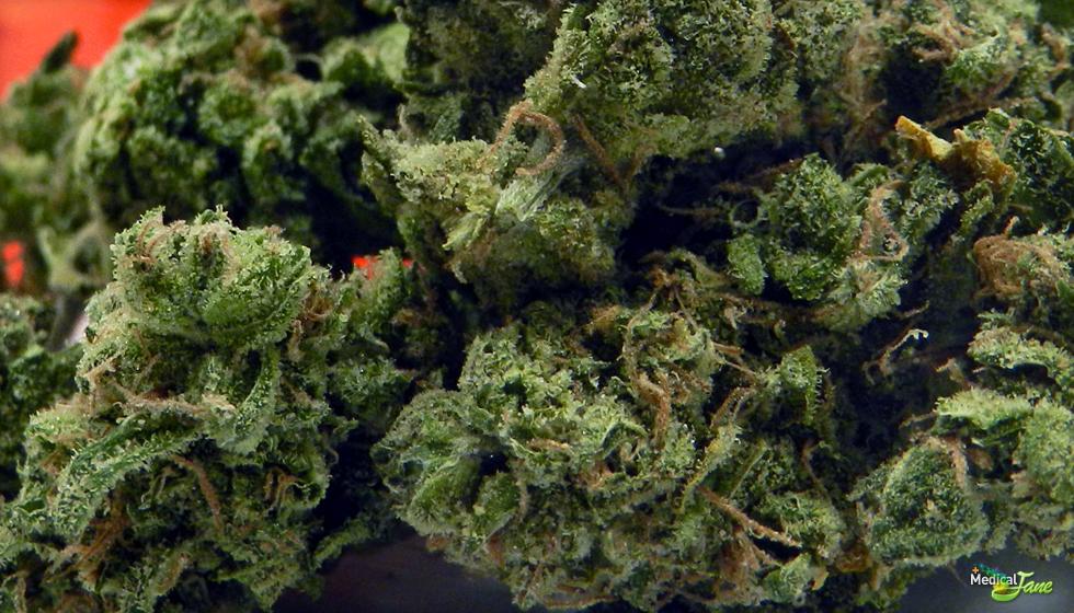 UK Cheese Marijuana Strain