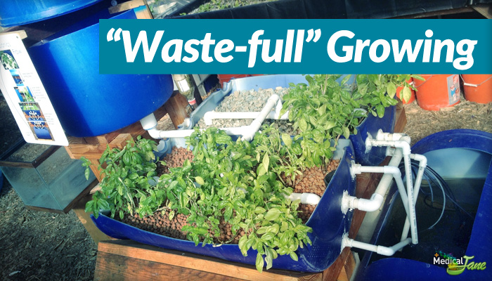 Aquaponics supplies in arizona aquaponics free plans for Arizona aquaponics