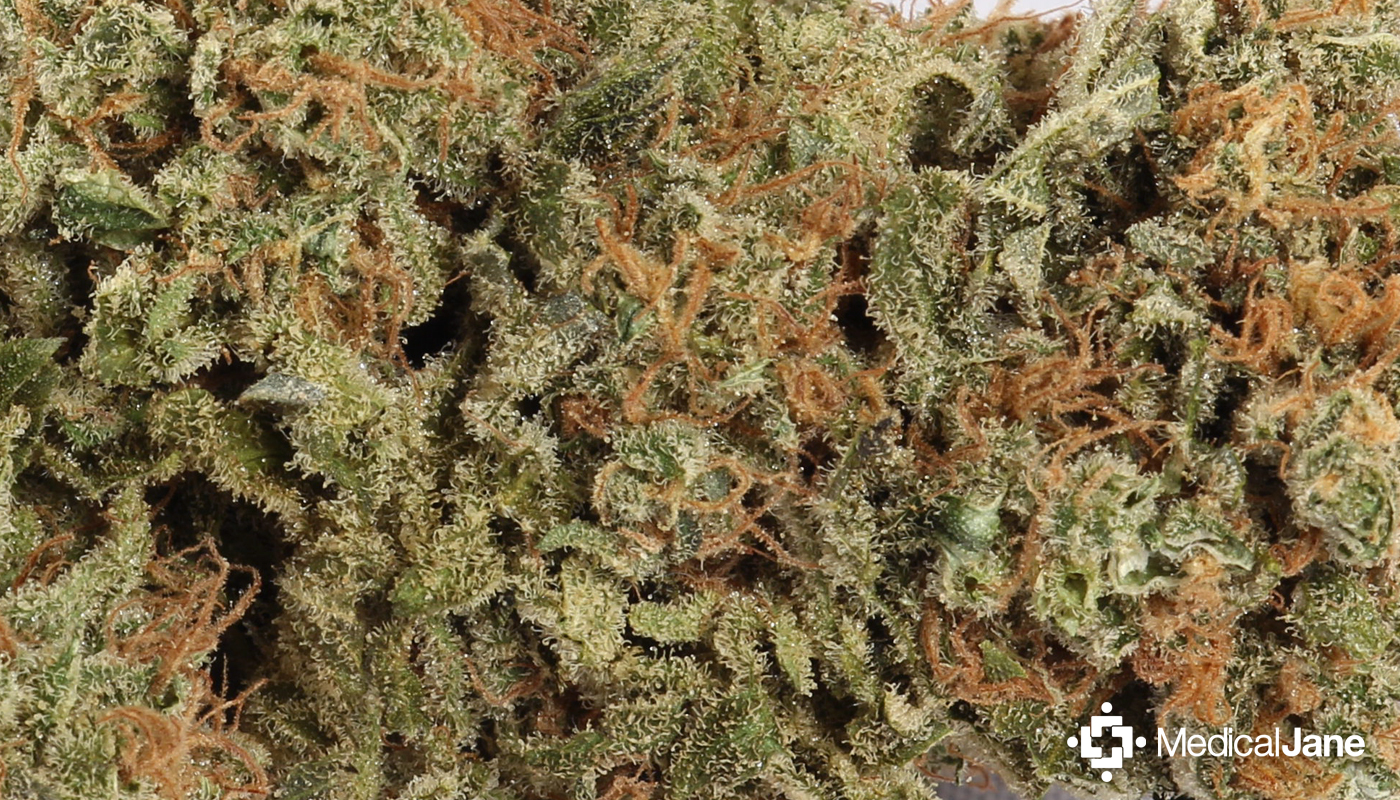 Atomic Northern Lights Marijuana Strain