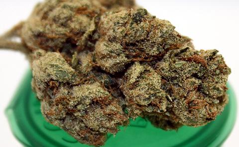 Candy Kush Marijuana Strain
