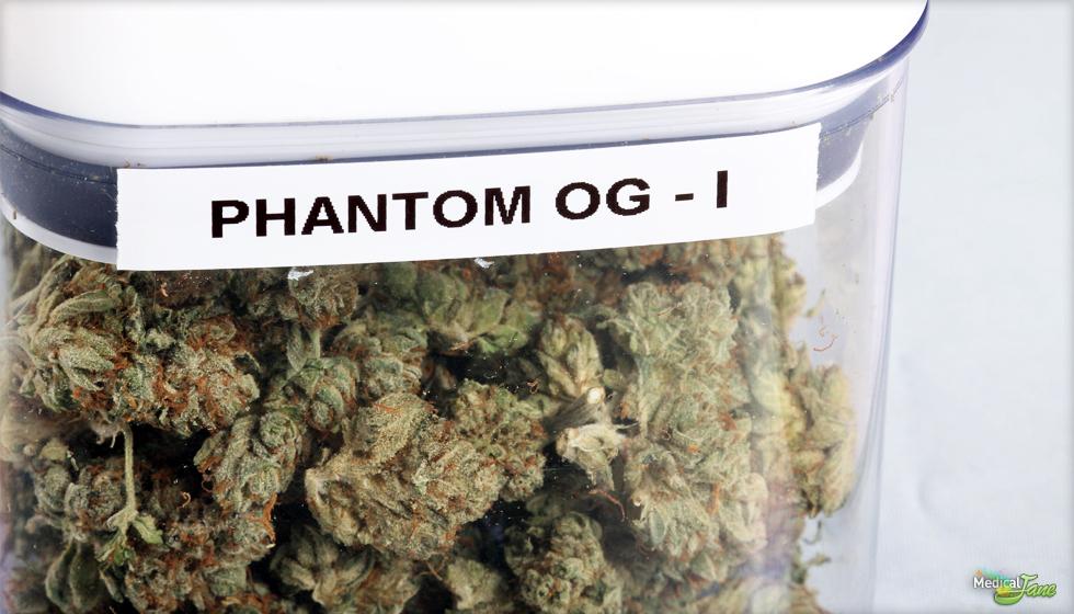 Phantom OG Marijuana Strain