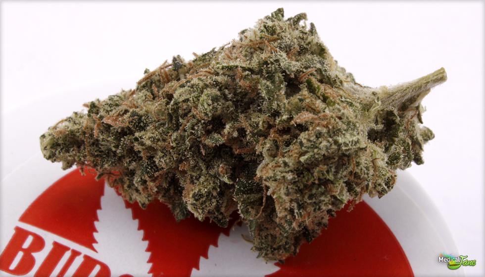Ghost Train Haze #1  Marijuana Strain