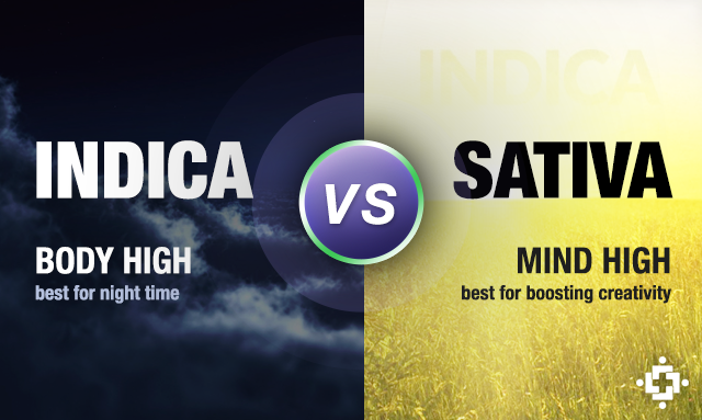 Indica vs. Sativa Medical Marijuana Strain Differences