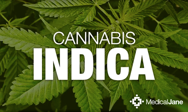 A Brief Overview of Cannabis Indica Strains