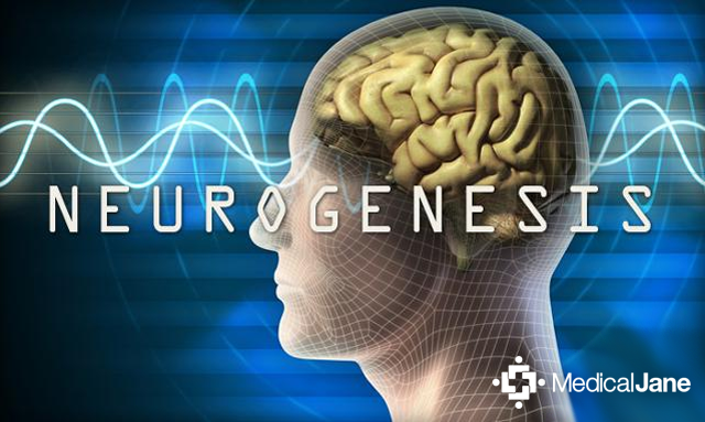 Neurogenesis Gives Birth To New Neurons In the Brain; Helps Relieve Stress