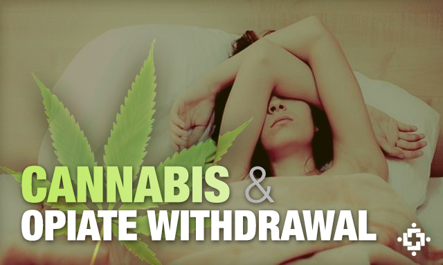 Cannabis Shown To Ease Symptoms During Opiate Withdrawal