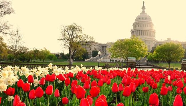 Washington D.C. Decriminalization Legislation Introduced