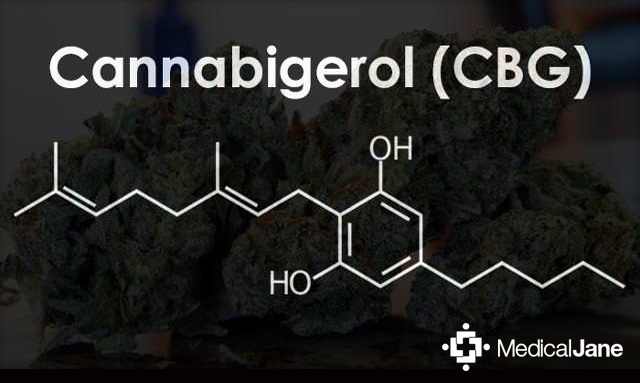 Cannabigerol (CBG): A Minor Cannabinoid With A Major Impact