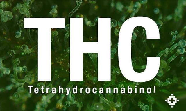 Tetrahydrocannabinol (THC): The Most Popular Cannabinoid