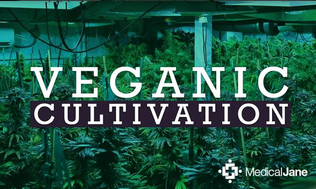 Veganic Cultivation Promises Better Potency, Bigger Harvests