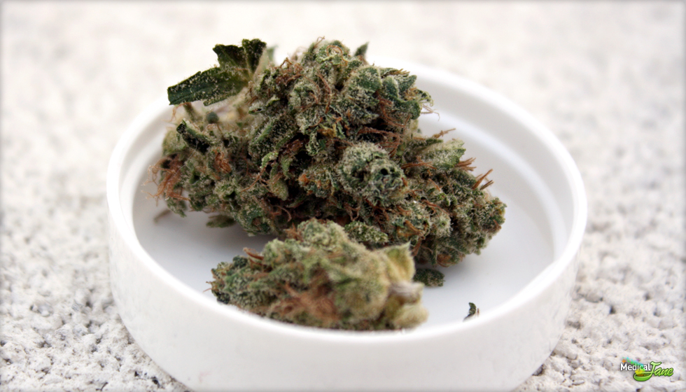 Orange Diesel (Agent D) Marijuana Strain