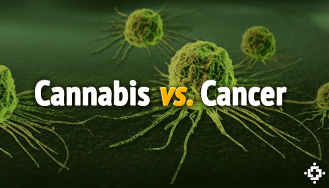 [Imagem: cannabisvscancer_0.jpg]