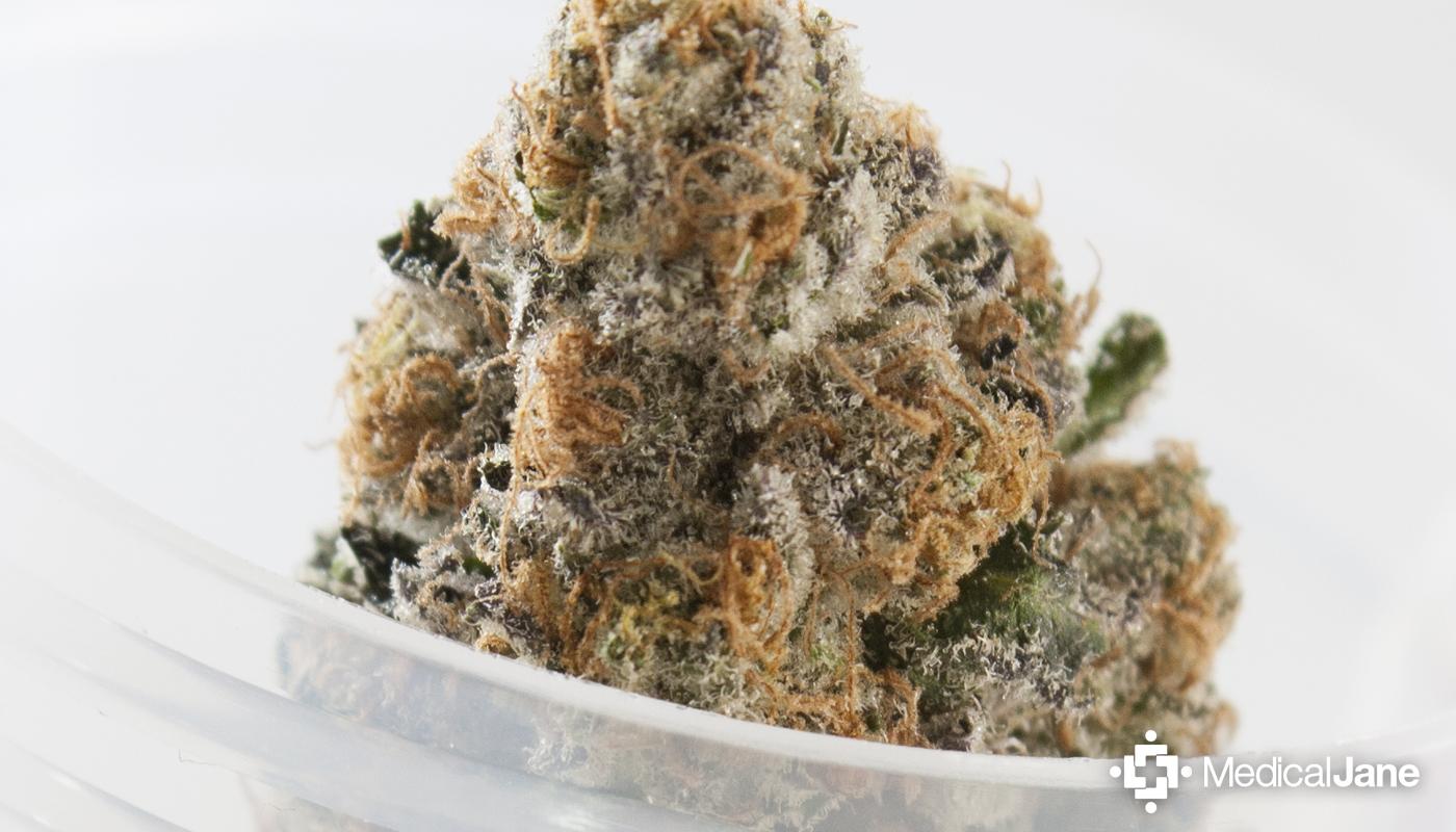 Platinum Cookies Marijuana Strain