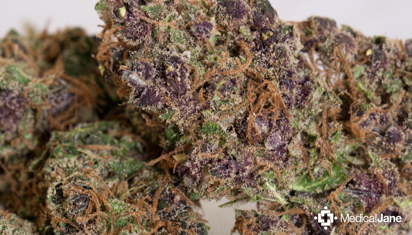 Black Jack Marijuana Strain