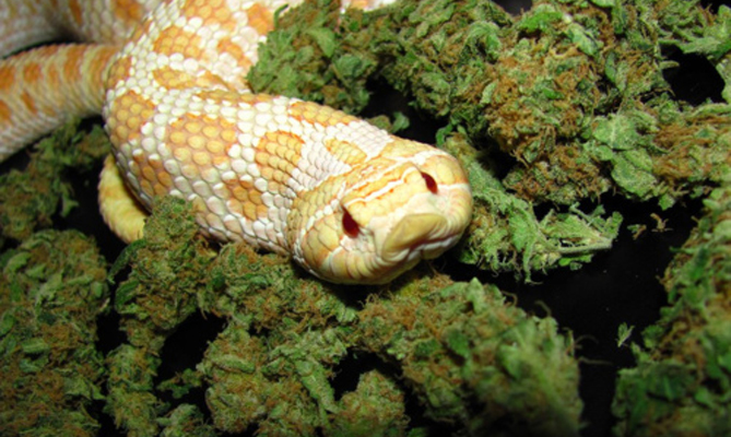 Snakes In The Grass: Stay Informed And Spread The Word