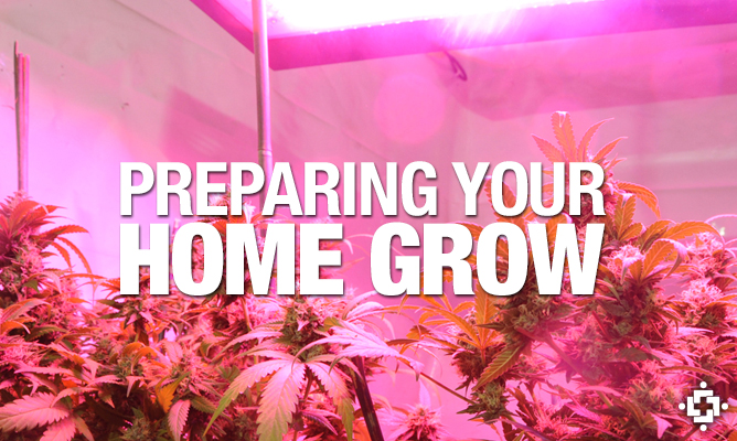 Things To Consider When Preparing Your Home Grow
