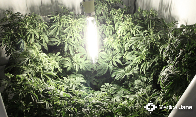 How To Build Your Own Indoor Medical Marijuana Garden