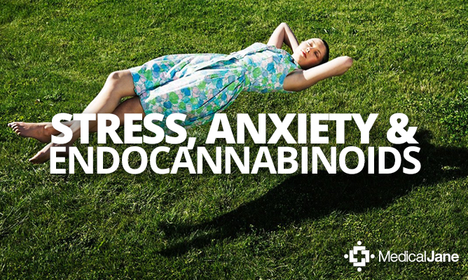 Study: Cannabinoid Therapies May Help Treat Stress-Induced Anxiety Disorders