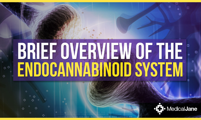 The Endocannabinoid System Helps Maintain Homeostasis