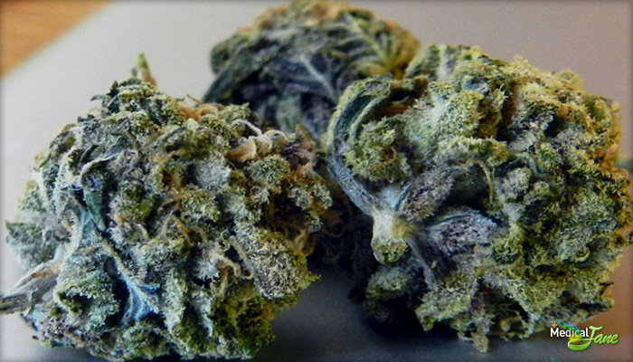 Blue Island Dream Marijuana Strain