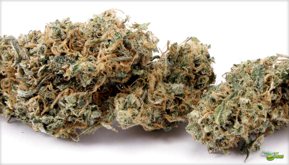 Cannatonic Marijuana Strain