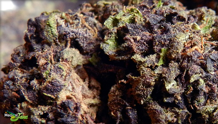 The Purps Marijuana Strain