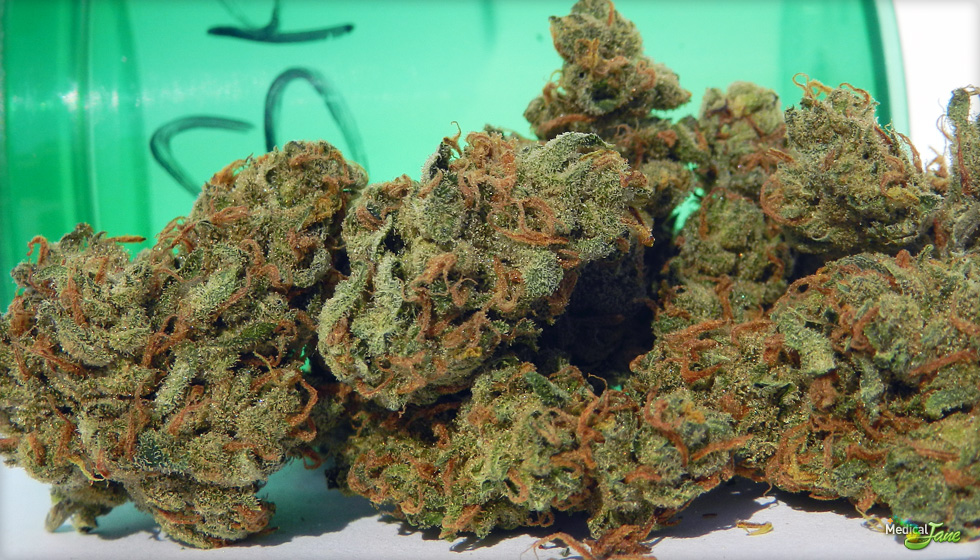 Sweet Island Skunk Marijuana Strain