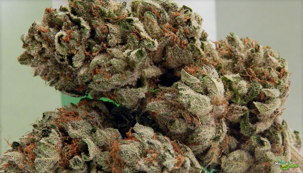 Herojuana OG (or Herijuana OG) Marijuana Strain