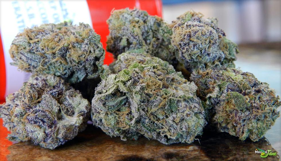 Purple Dynamite  Marijuana Strain