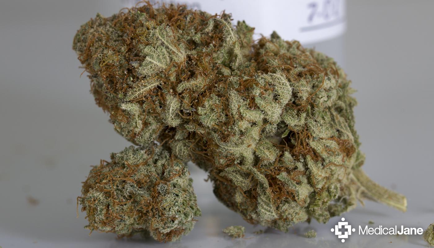 Blackberry Kush Marijuana Strain
