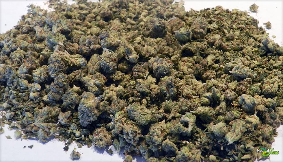 Cali Bud Salad Marijuana Strain