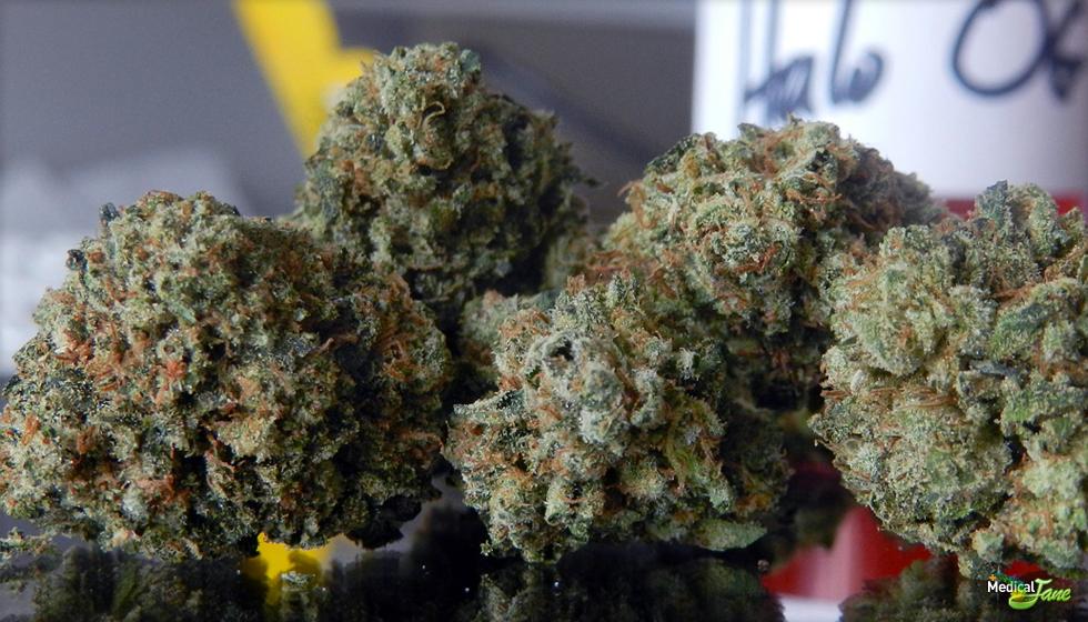 Halo OG Marijuana Strain