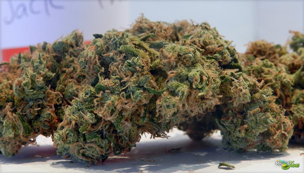 Jack Frost Marijuana Strain