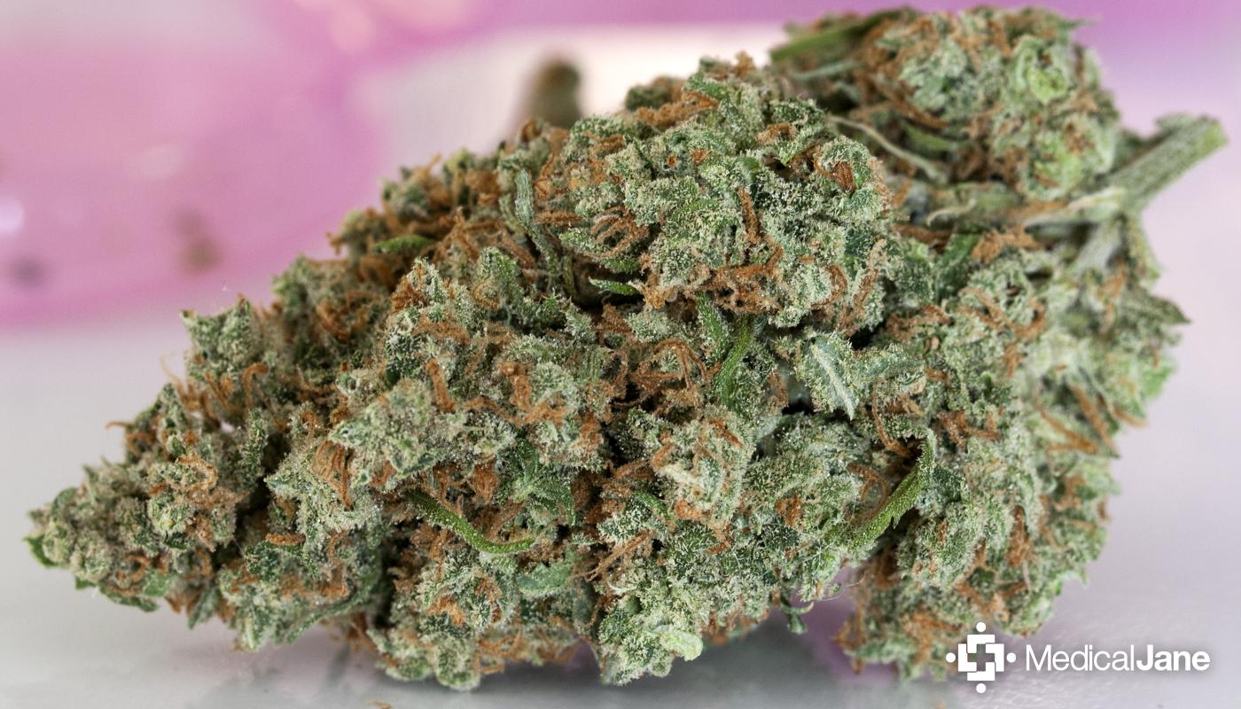 Jack Herer Marijuana Strain (Review)