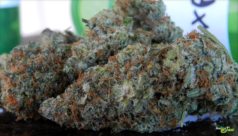 Pineapple Express Marijuana Strain