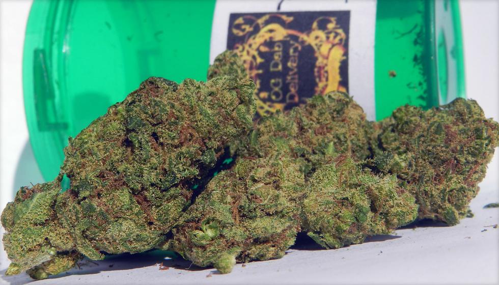 Dutch Treat Marijuana Strain