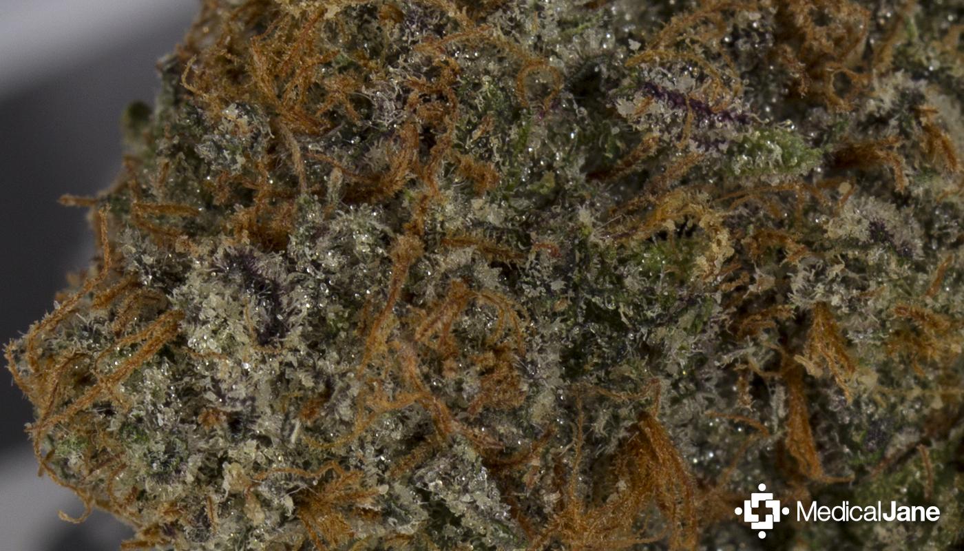 Granddaddy Purple (GDP) Marijuana Strain