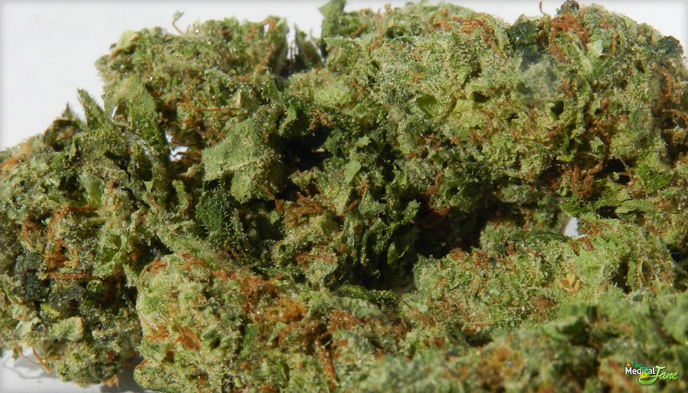 707 OG Chem Marijuana Strain