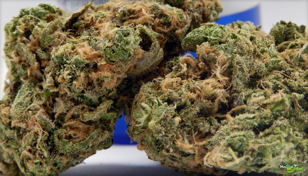 Blue Diesel Marijuana Strain
